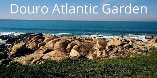 Twelve Lots at Douro Atlantic Garden Sell for €5.5 Million